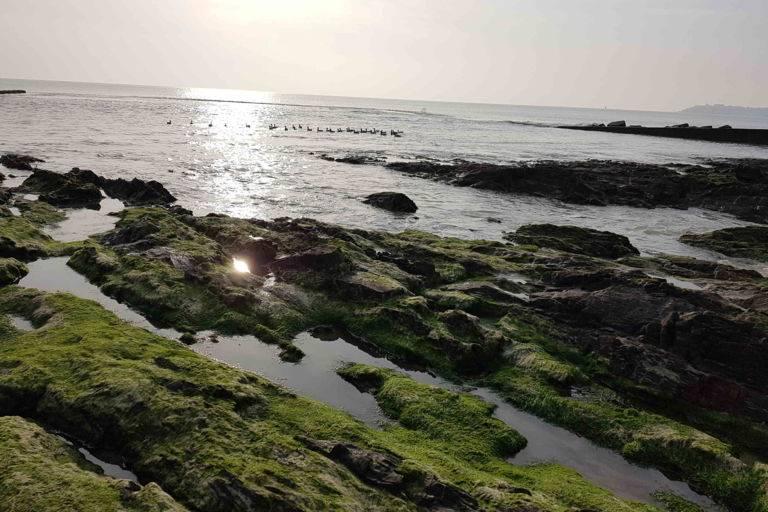 Terrasse St-Pair-sur-Mer JOA